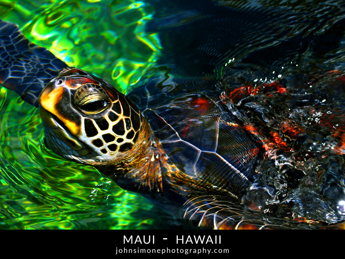 A photo-essay by John Simone Photography on Maui, Hawaii