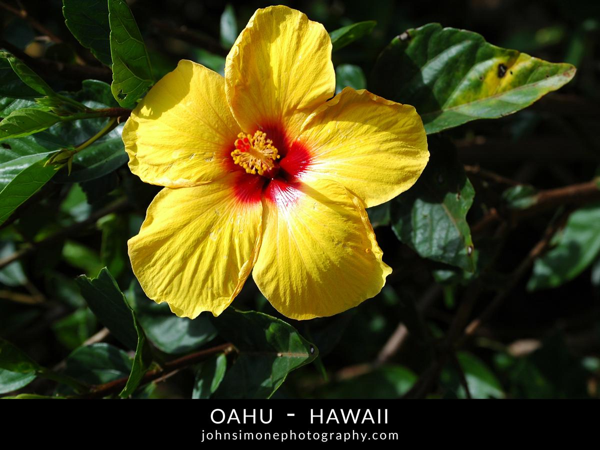 Jetsetjohnny exotic destination travel photos of oahu hawaii jetsetjohnny features izmirmasajfo